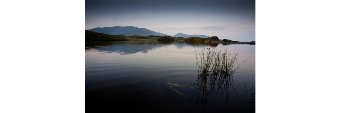 Llyn Y Dywarchen reeds looking over to Snowdon